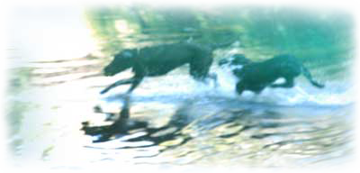 Willow Glen Dogs Playing